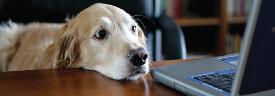 Dog looking at a laptop computer