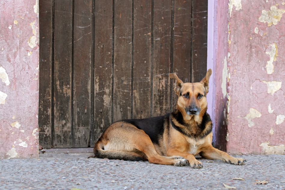Homeless, stray street dog laying down in front of a door
