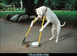 Dog poo2