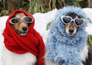 dogs-in-scarves