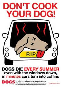 Dont cook your dog
