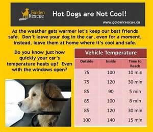 Hot Dog Temp