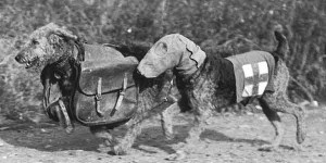 DOGS-gas-mask-hounds