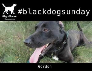#gordon