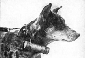 messenger-dog