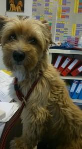 Small fluffy dog sitting on desk