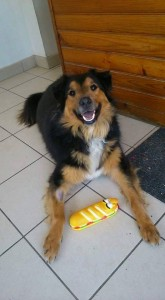 Very happy looking dog with his toy. Dog is diabetic. Sad.