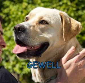gwell