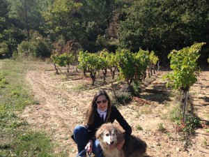 old dog happy in vineyard.