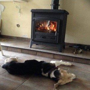 Tricolored dog lying in front of stove