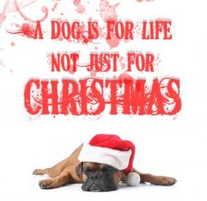 cute wrinkly dog wearing santa hat.