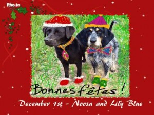 Two dogs wearing Christmas hats and tinsle