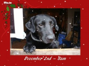 dog in Christmas themed photo frame