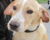 Eridan male cross breed puppy