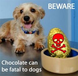 chocolate-poisonous-to-dogs