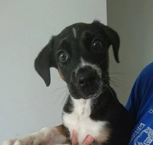 black wup with brown and white markings