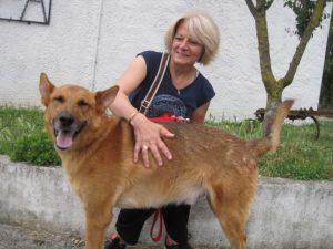 big brown dog with women. Both smiling