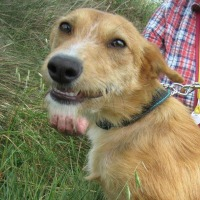 Belette female terrier cross