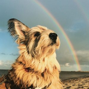 beautiful dog looking at rainbow