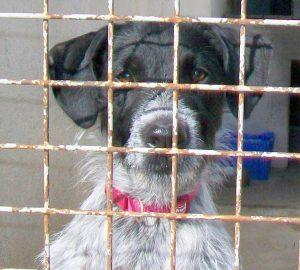 black and white scruffy dog