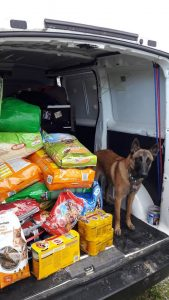 Malinois delivering food