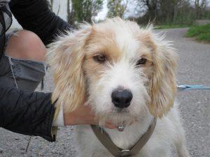 fluffy pale coloured dog