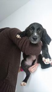 black puppy with white chest