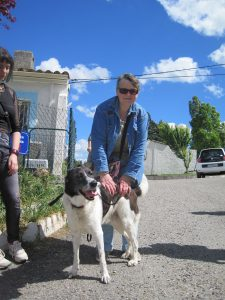 Big border collie with woman