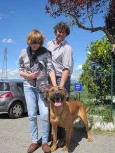 big brown dog with new owners