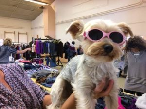 yorkie wearing pink sunglasses