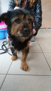 scruffy old terrier