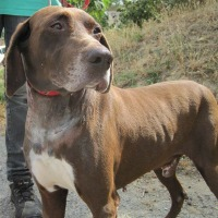Freedom male pointer cross