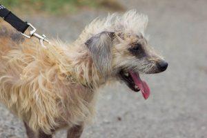 small scruffy dog 2