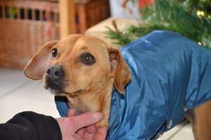 small dog wearing coat