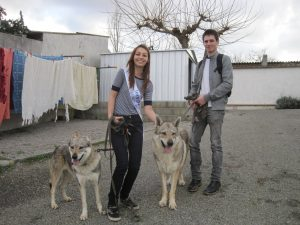couple with czech wolves