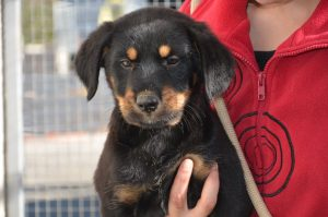 black and tan pup
