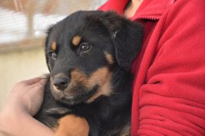 black and brown pup