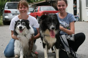 border collie with other dog