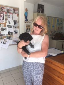 spaniel in woman's arms