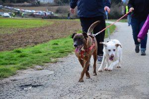 two dogs walking side by side