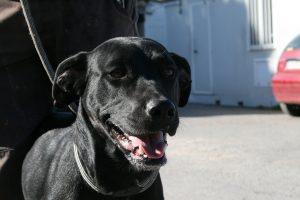 Black shiny dog